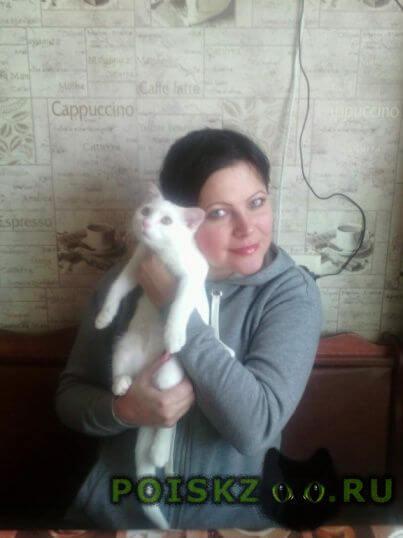 Пропал кот белый . г.Волгоград