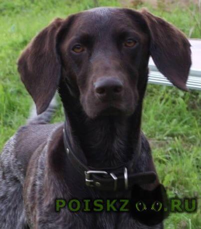 Пропала собака кобель г.Кашин