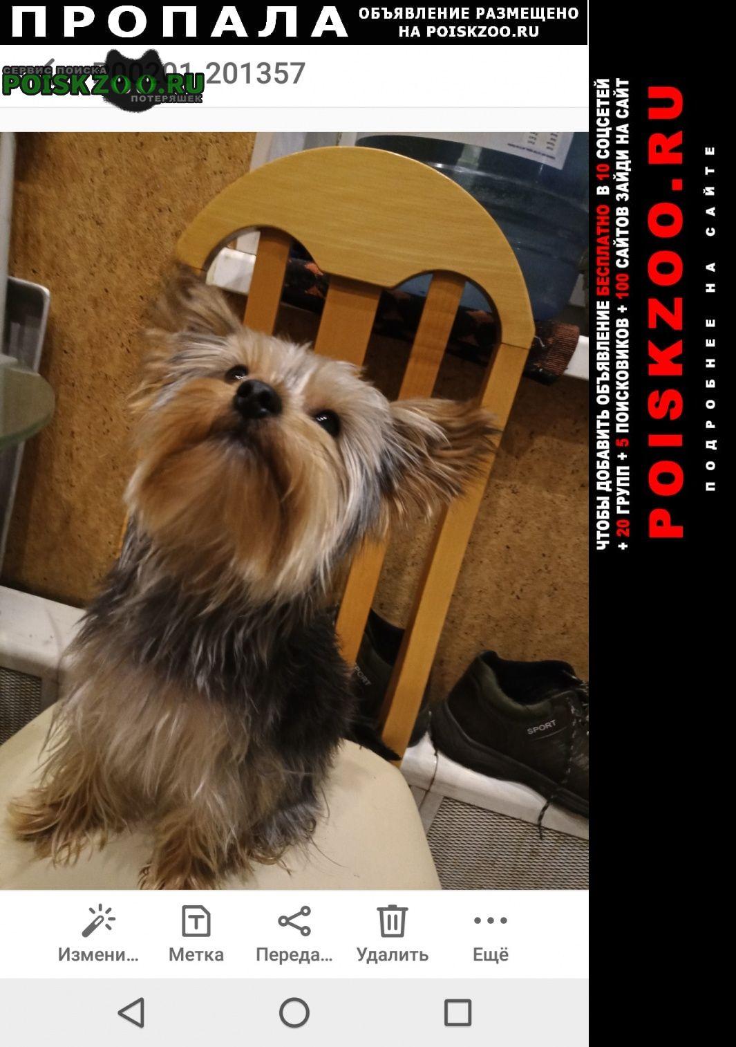 Пропала собака мини йорк 2 года, кличка Шатура