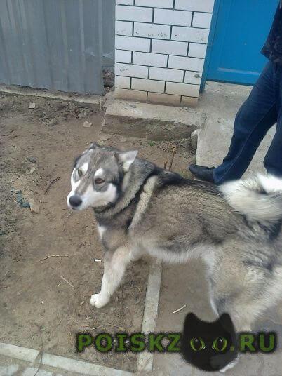 Пропала собака кобель г.Астрахань
