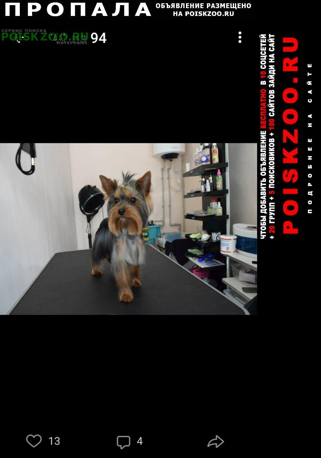 Дзержинск Пропала собака