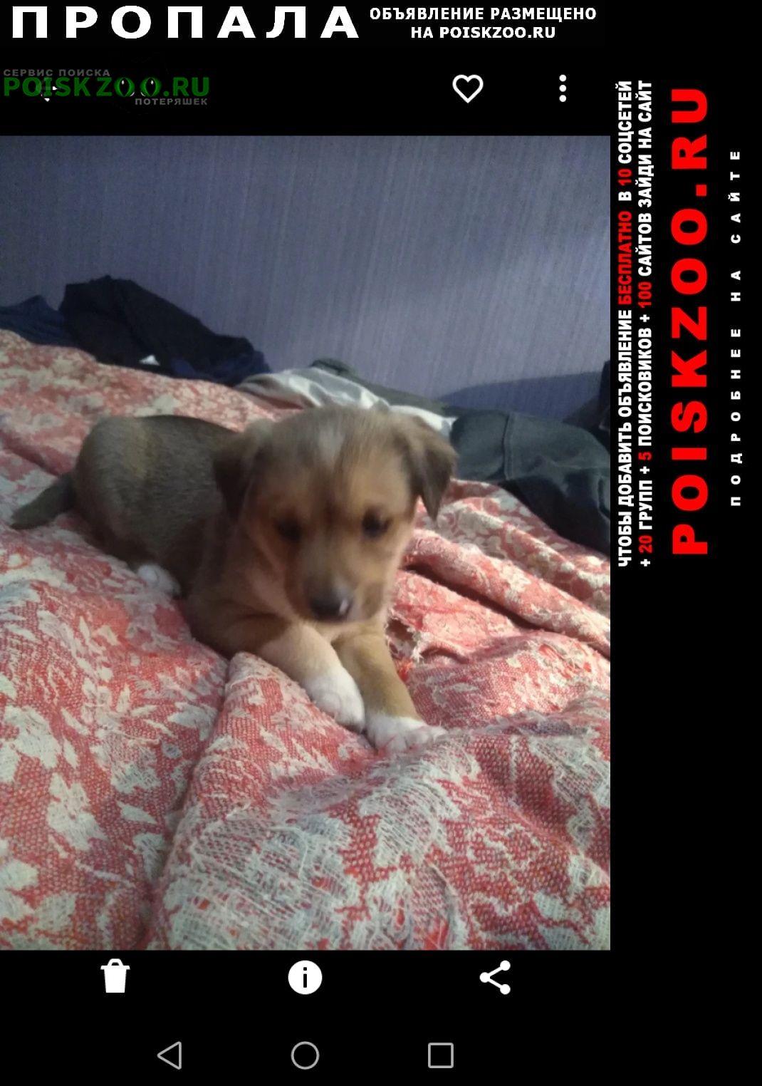 Пропала собака кобель шенок 4 месяца окрас рыжий Братск