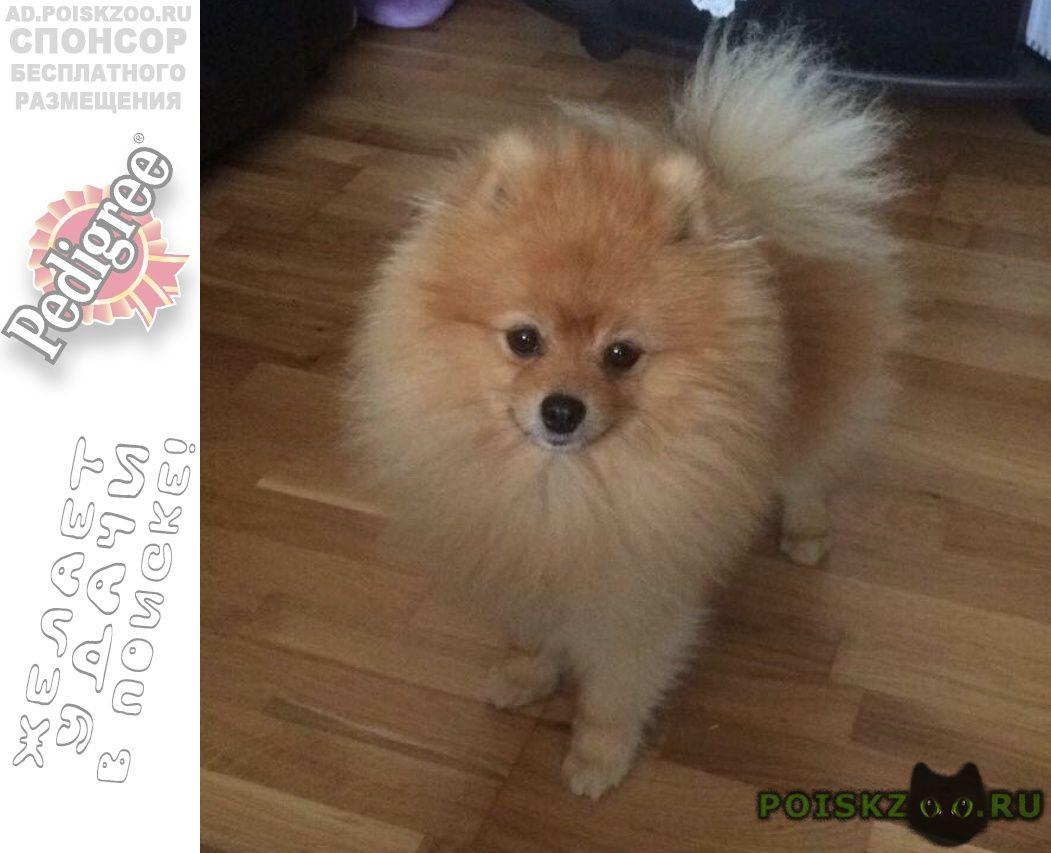 Пропала собака кобель вознаграждение  г.Краснодар