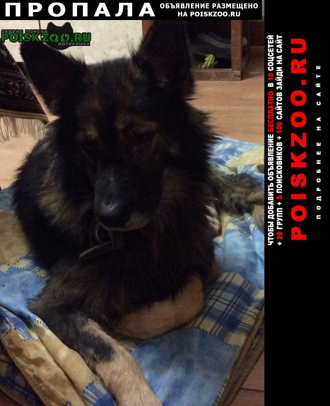 Пропала собака кобель Коммунар