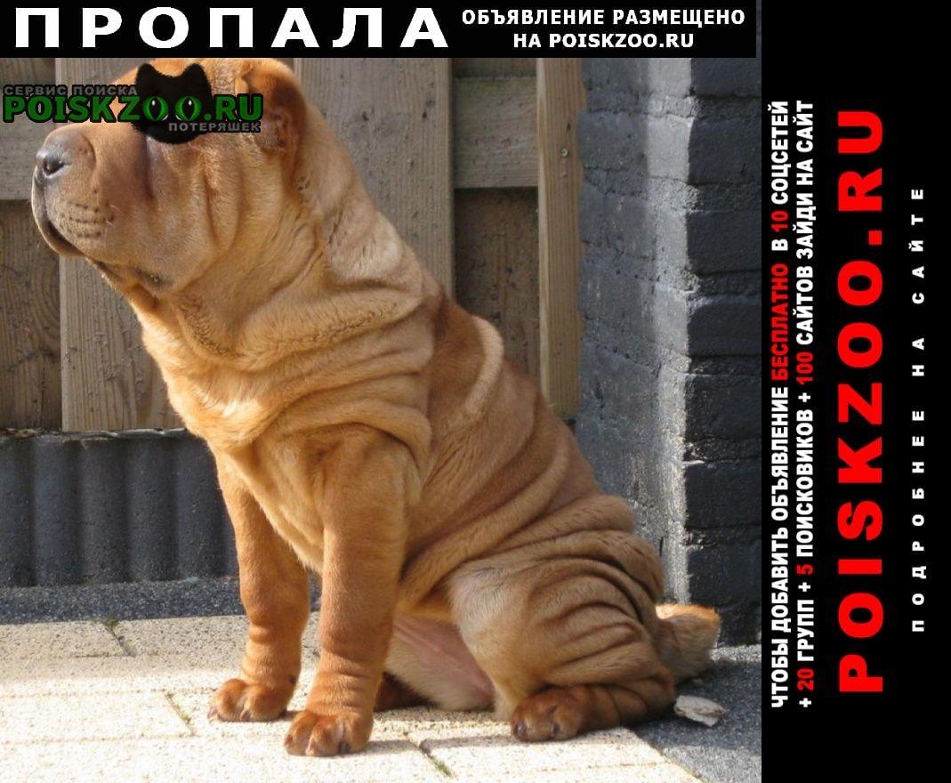 Адыгейск Пропала собака породы шарпей