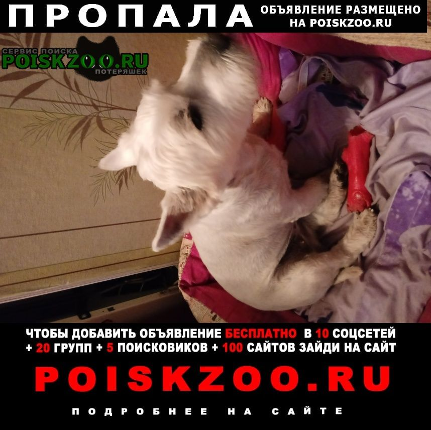 Лихославль Пропала собака