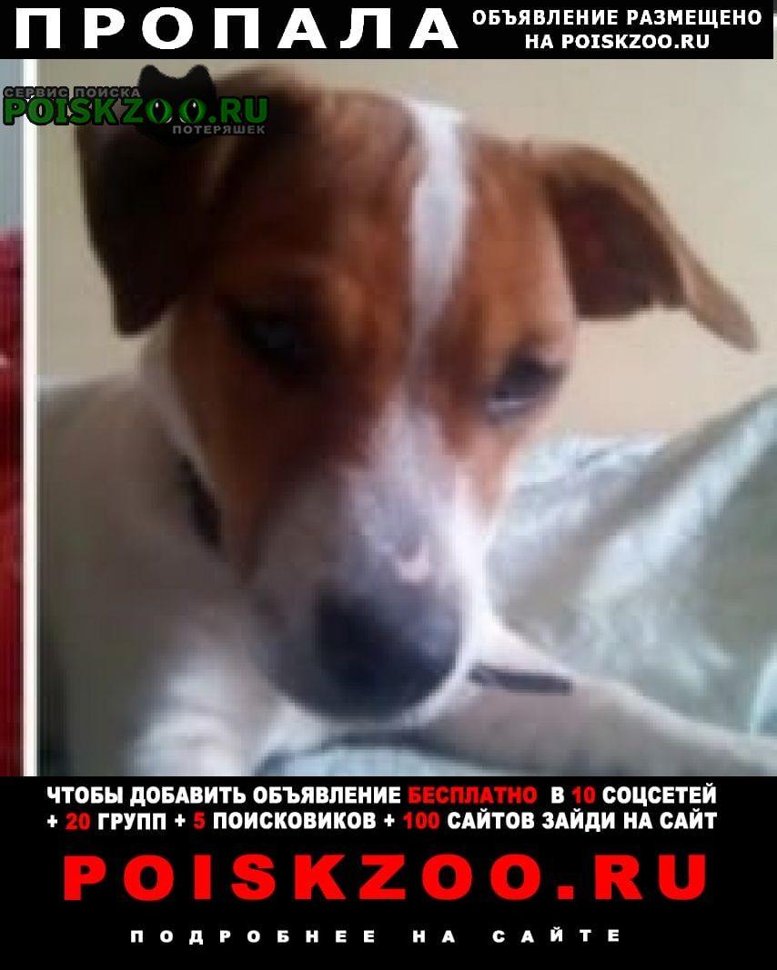 Пропала собака порода джек-расселл Кетово