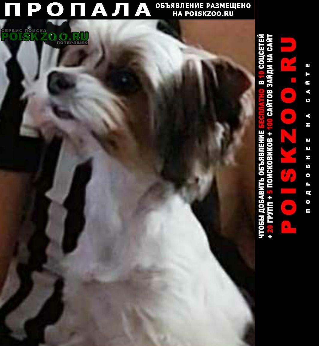 Пропала собака кобель прошу помочь найти любимца Пятигорск
