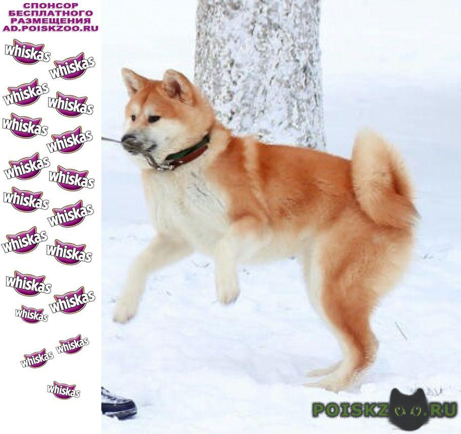 Пропала собака г.Владимир