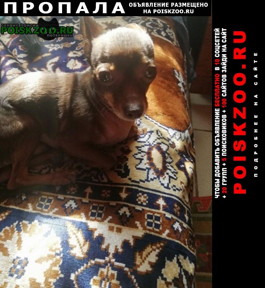 Пропала собака по дороге нуримановского района Уфа