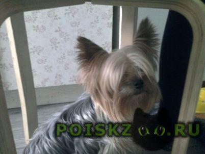 Пропала собака кобель йорк.мальчик Москва