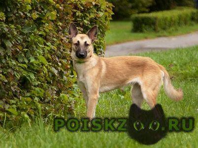 Пропала собака      . г.Зеленоград