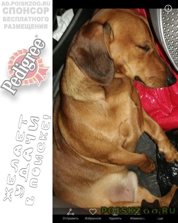 Пропала собака кобель в посёлке степной. г.Ейск