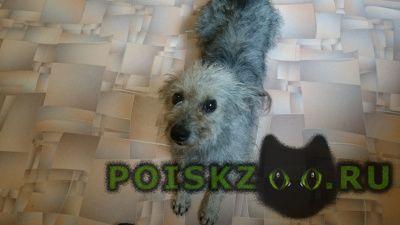 Пропала собака кобель. г. г.Хабаровск