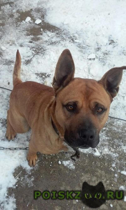 Пропала собака кобель 27 августа вечером по кли г.Сочи