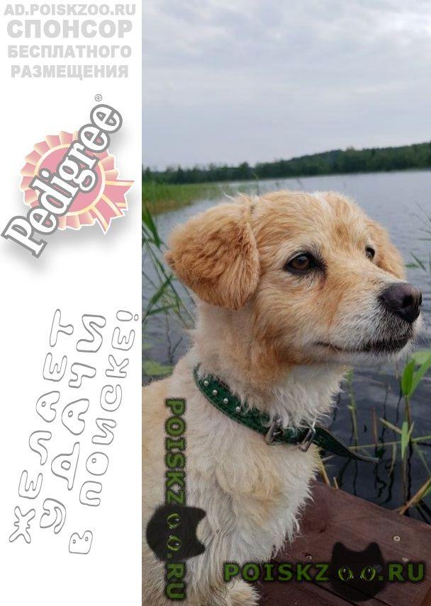 Пропала собака кобель г.Подольск