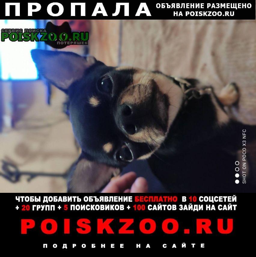 Пропала собака кобель на ул живописная Москва