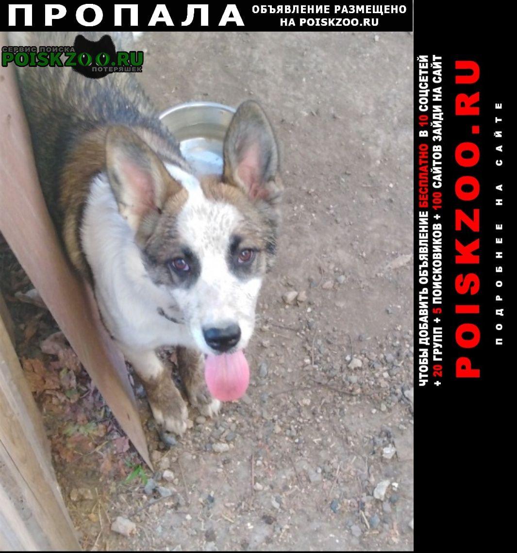 Пропала собака вознаграждение 3000 рублей Красногвардейское