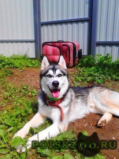 Пропала собака кобель г.Пушкино