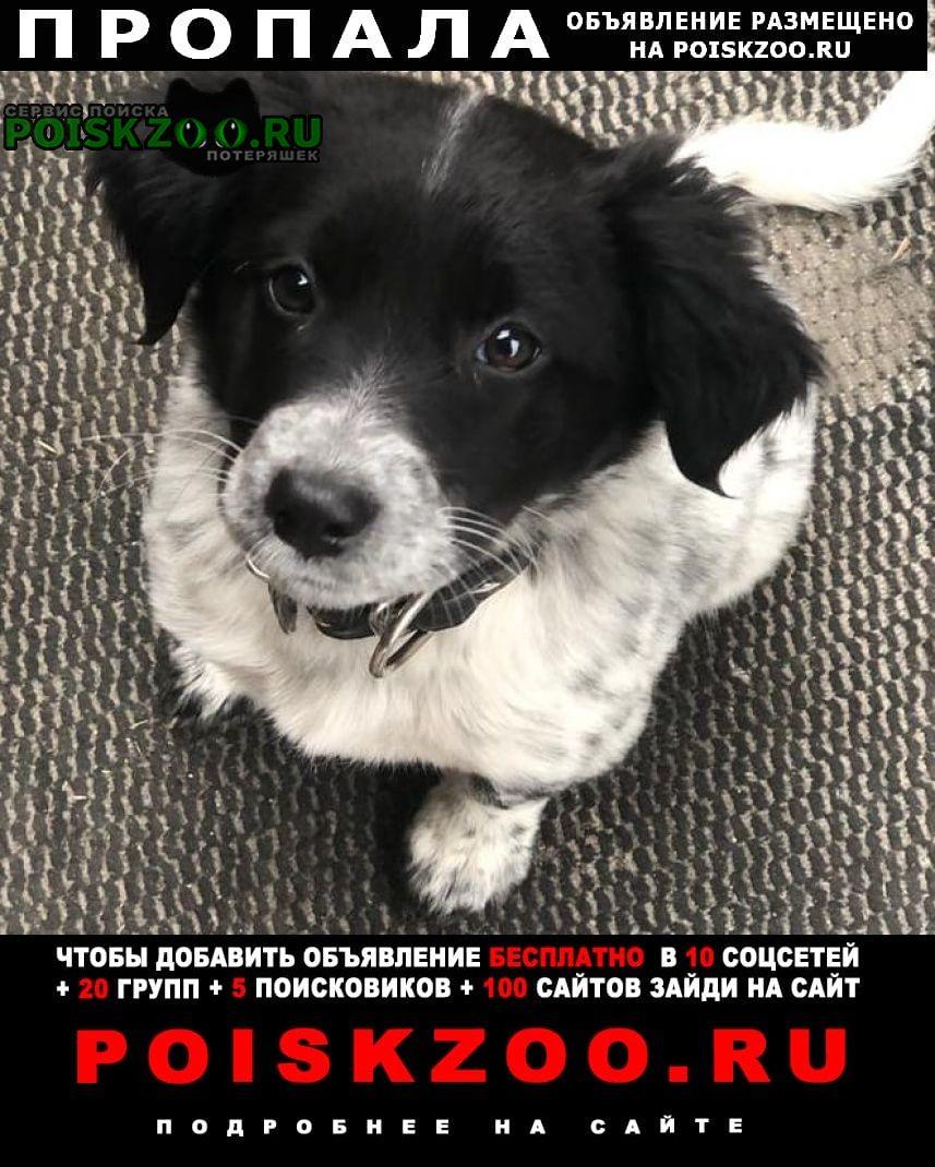 Пропала собака 22. 11. 20 в лаго-наки щенок друз Майкоп (Адыгея)
