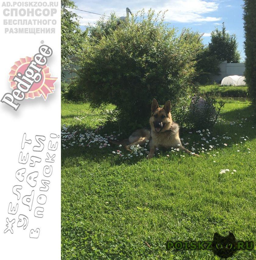 Пропала собака кобель г.Ступино