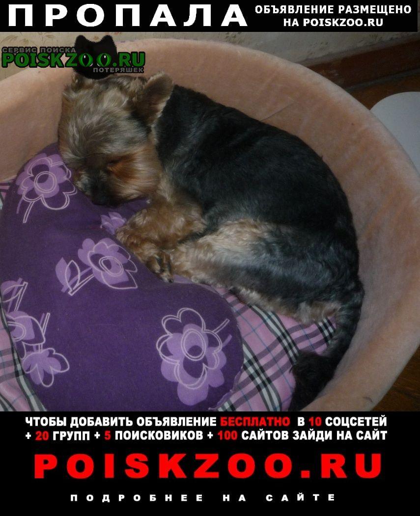 Пропала собака кобель поиск продолжаем Москва