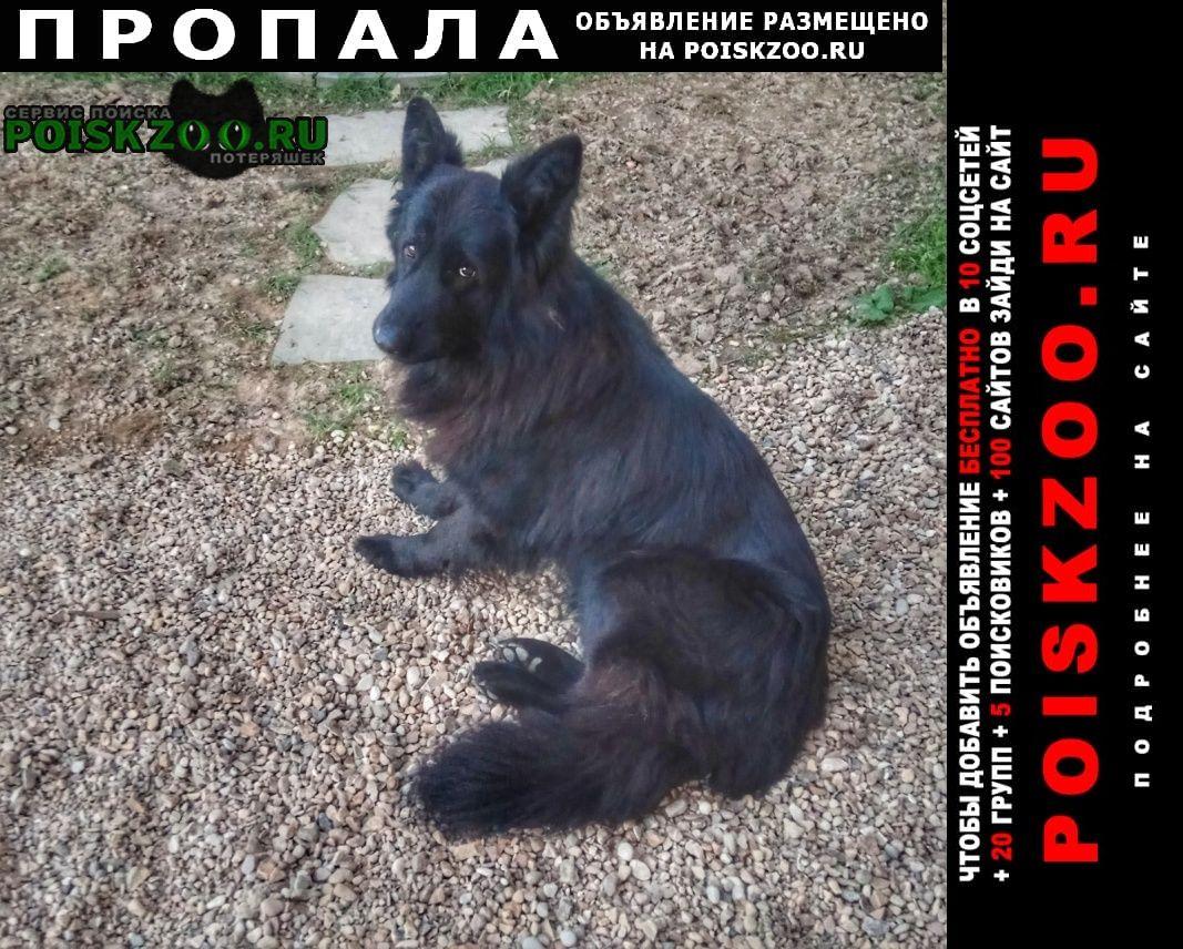 Пропала собака кобель немецкая овчарка, длинношерстная, Москва