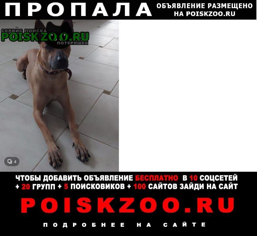 Пропала собака кобель помогите найти друга Краснозаводск