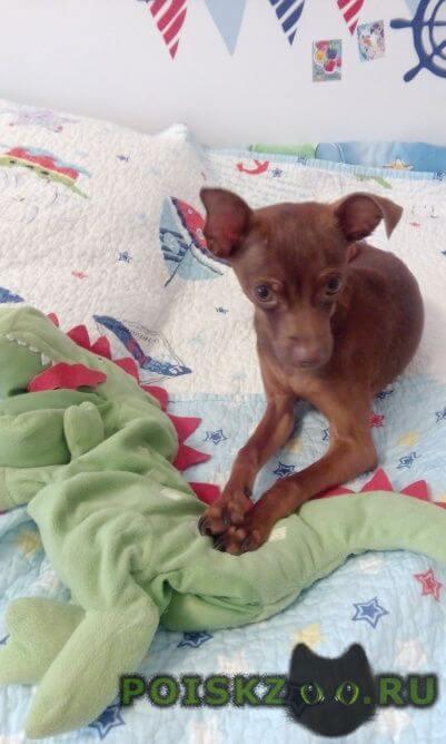 Пропала собака кобель г.Зеленоград