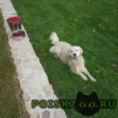 Пропала собака кобель друг г.Домодедово