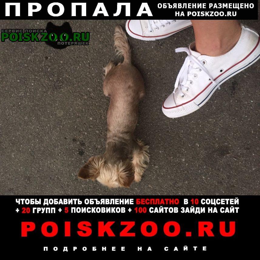 Пропала собака белль г.Санкт-Петербург