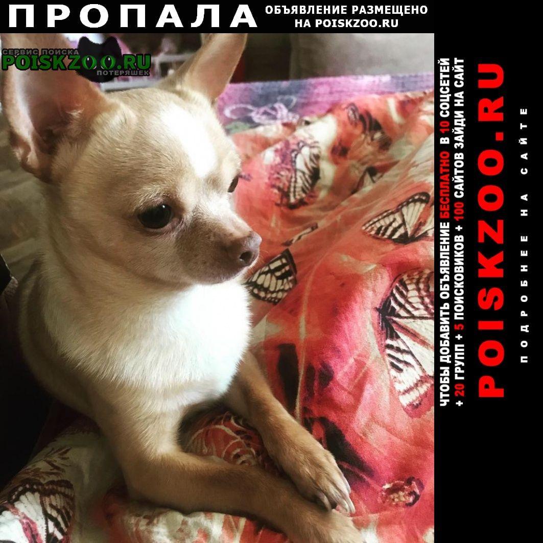 Пропала собака кобель чихуа хуа г.Москва