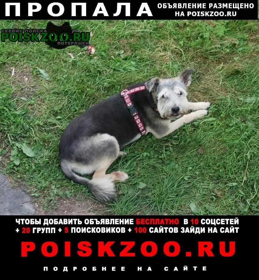 Пропала собака г.Уваровка