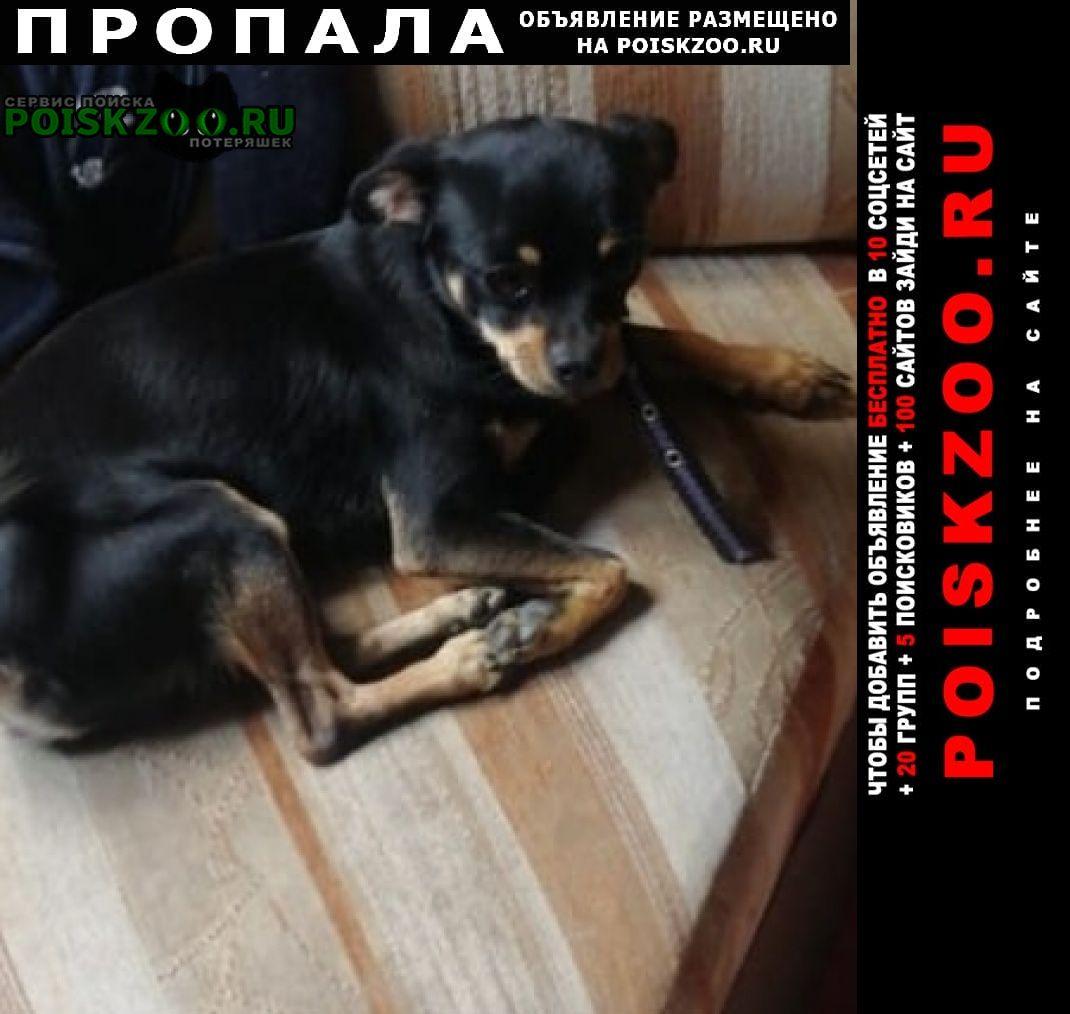 Пропала собака кобель нижняя гостагайка. сот. строитель г.Анапа