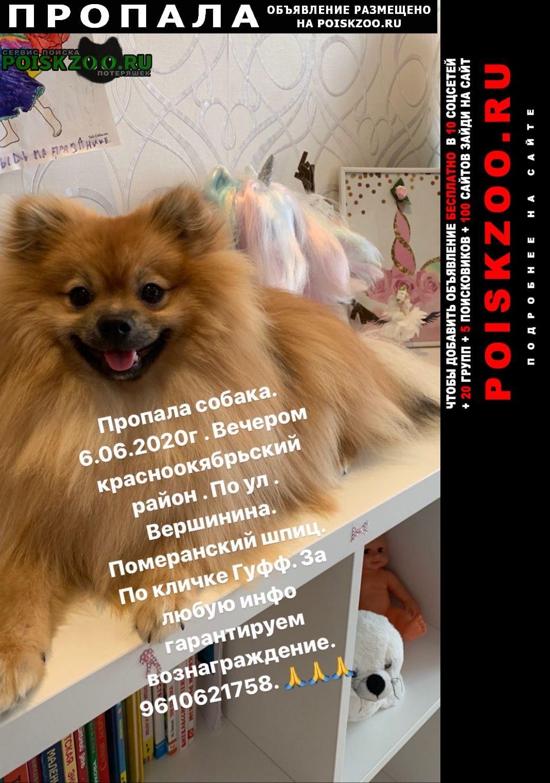 Пропала собака кобель померанский шпиц Волгоград