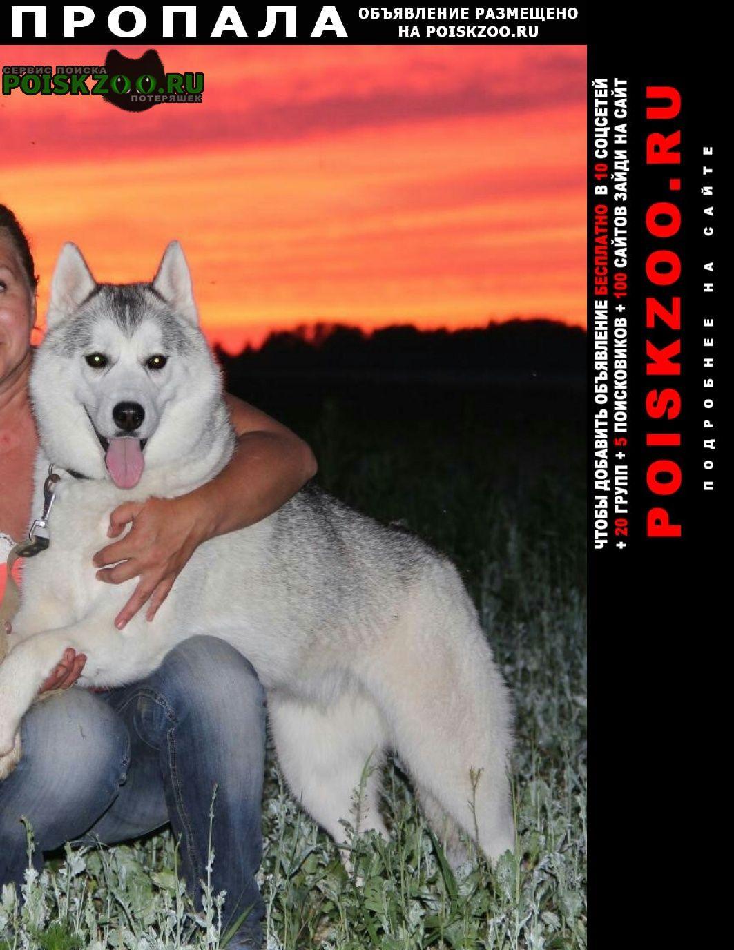 Пропала собака г.Кострома