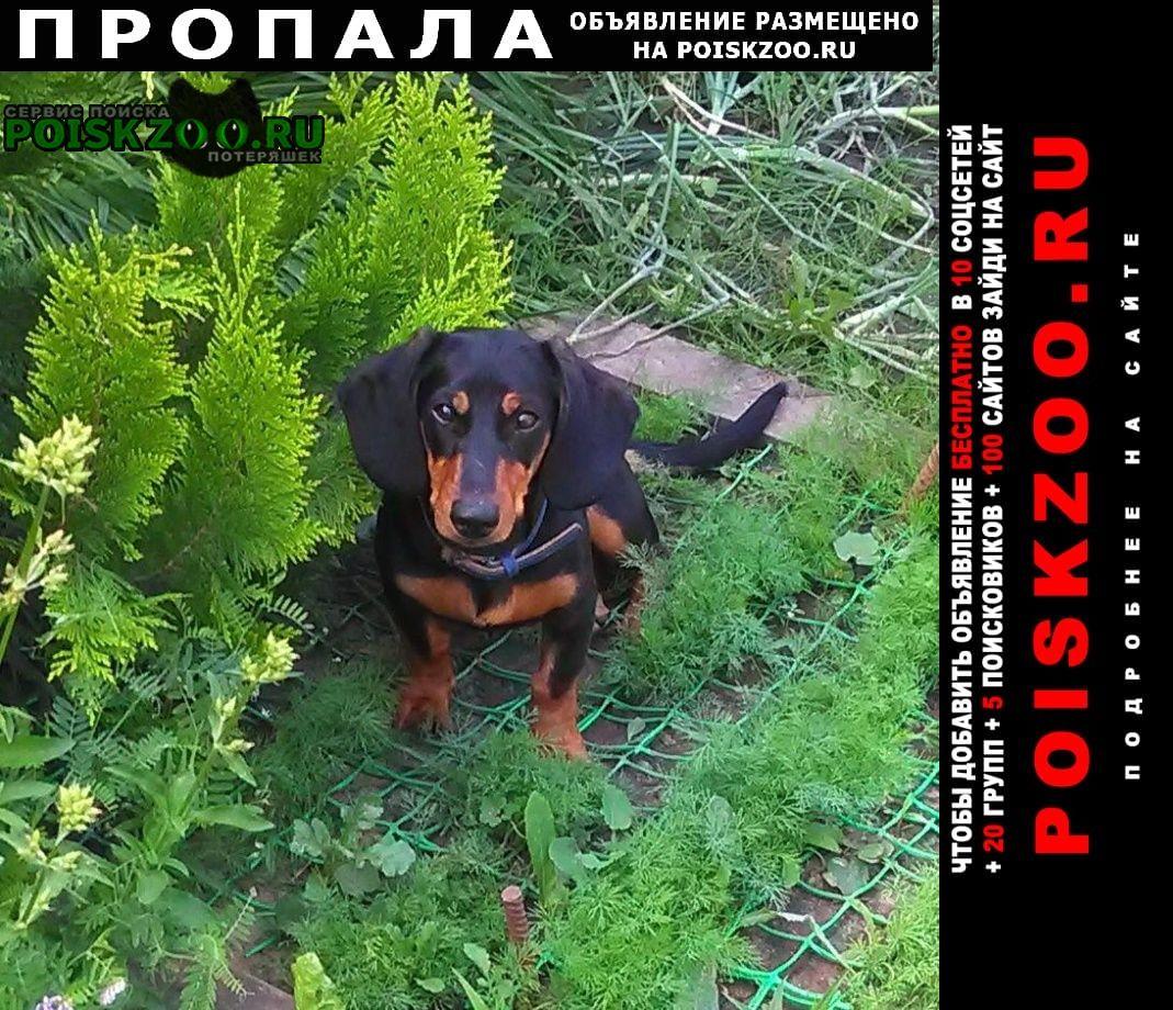 Пропала собака в районе балота г.Серпухов