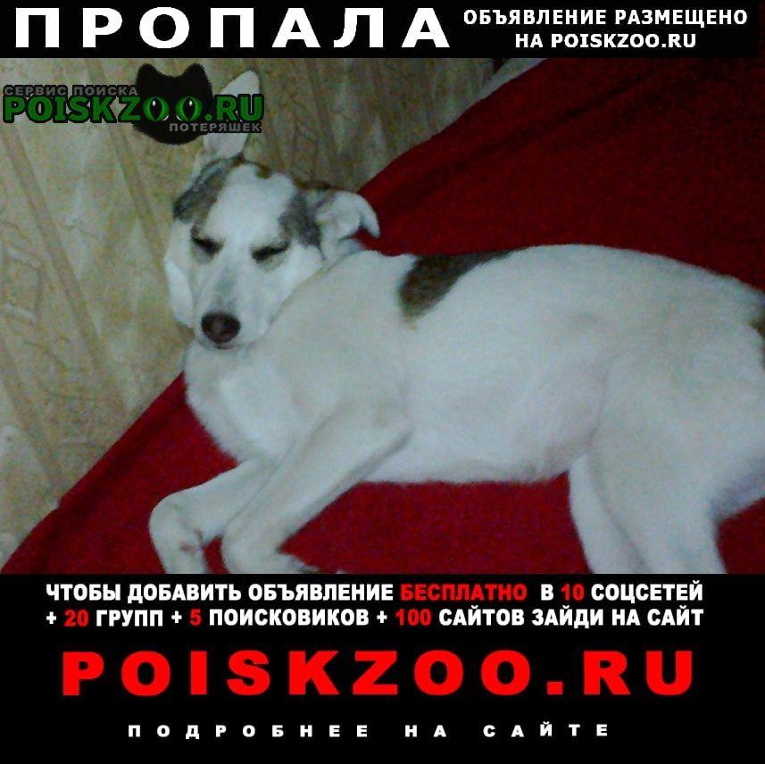 Пропала собака район бабушкина-щаденко г.Таганрог