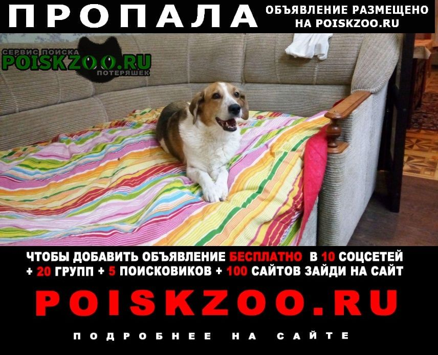 Пропала собака мкр. искра г.Зеленоград