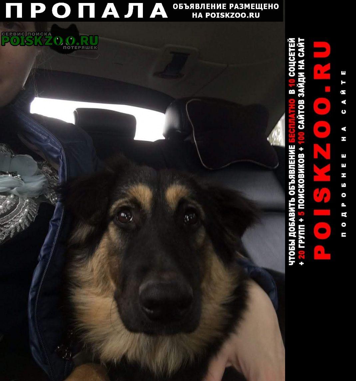 Пропала собака г.Астрахань