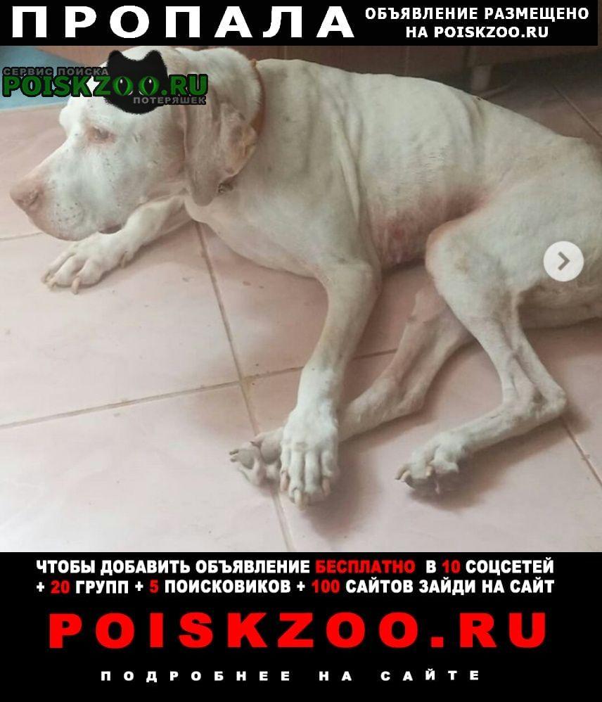 Пропала собака г.Куровское
