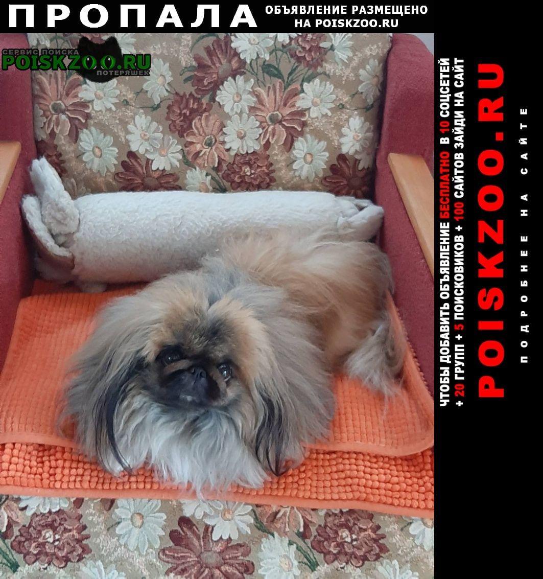 Пропала собака г.Самара