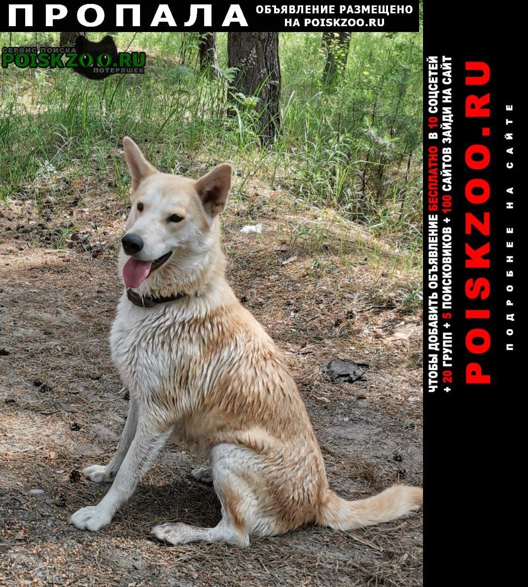 Пропала собака прропала хаски г.Нижний Новгород