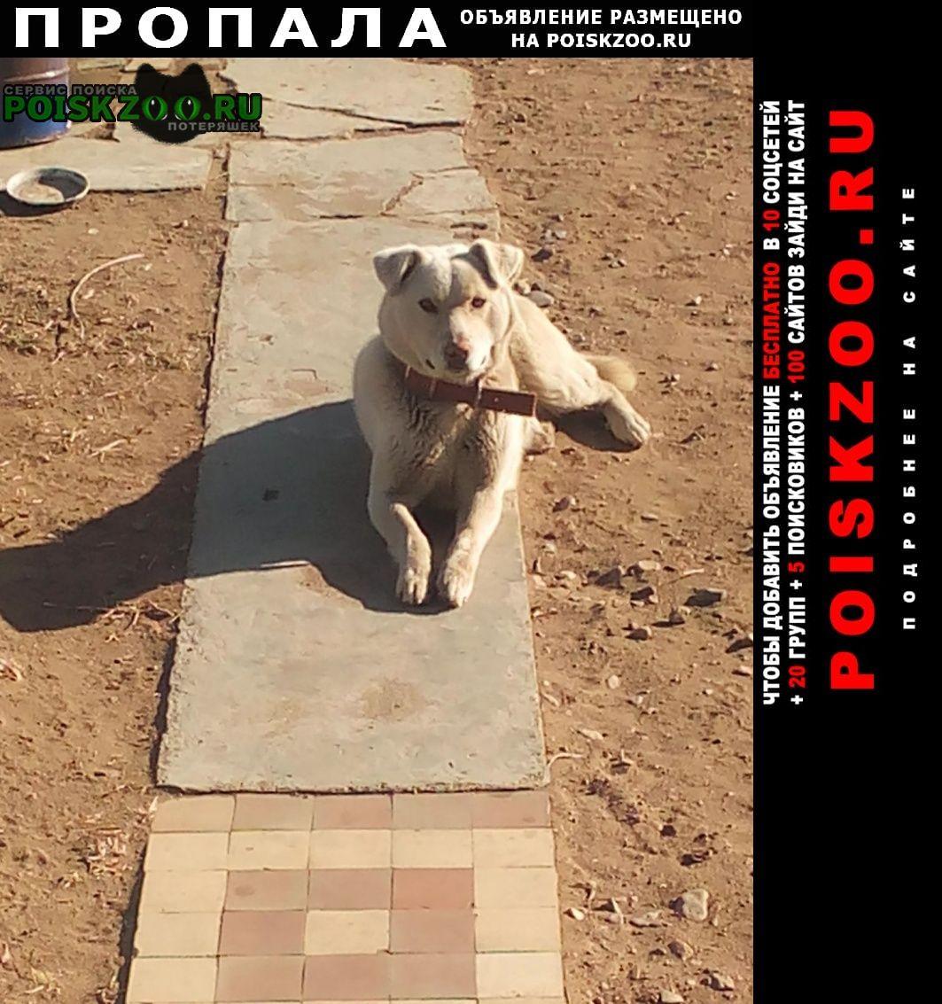 Пропала собака кобель любимый пёс г.Чита