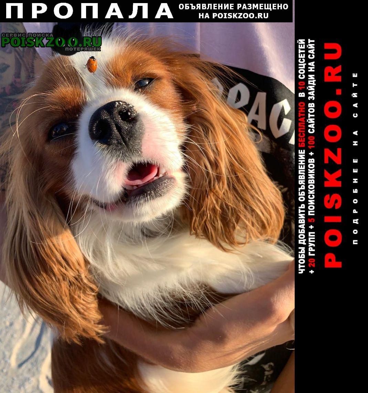 Пропала собака кобель срочно г.Севастополь