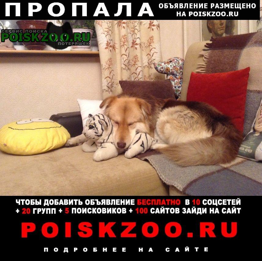 Пропала собака кобель г.Истра