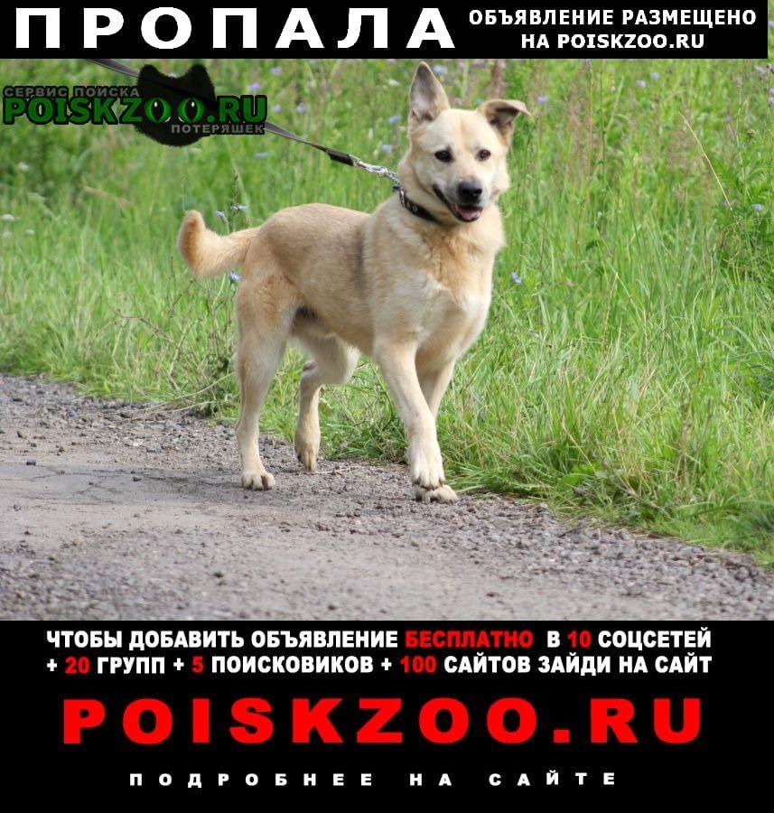 Пропала собака кобель, пожилой, песочный, светло-желтый Одинцово
