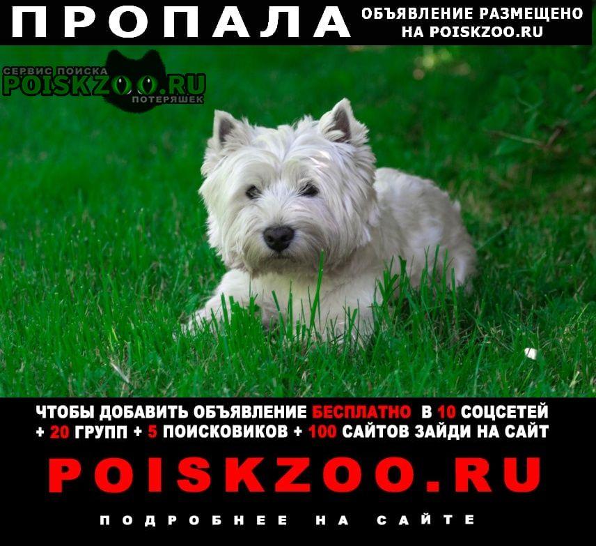 Пропала собака Чехов