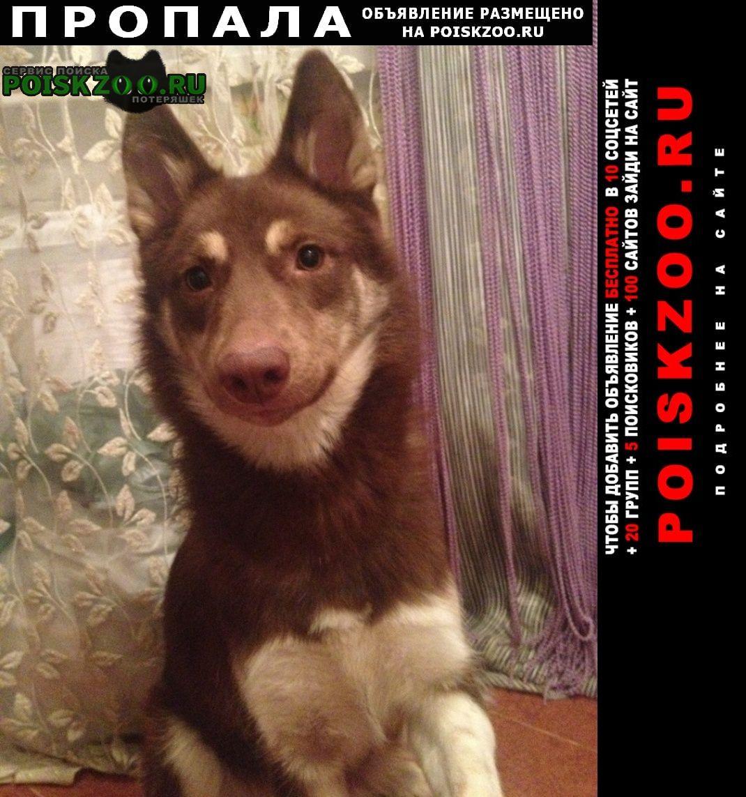 Пропала собака Альметьевск