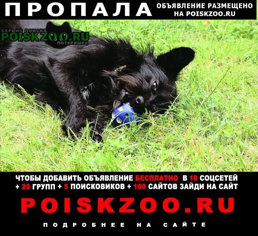 Пропала собака поиск черной собаки среднего размера Химки